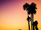 palm trees at sunset in LA